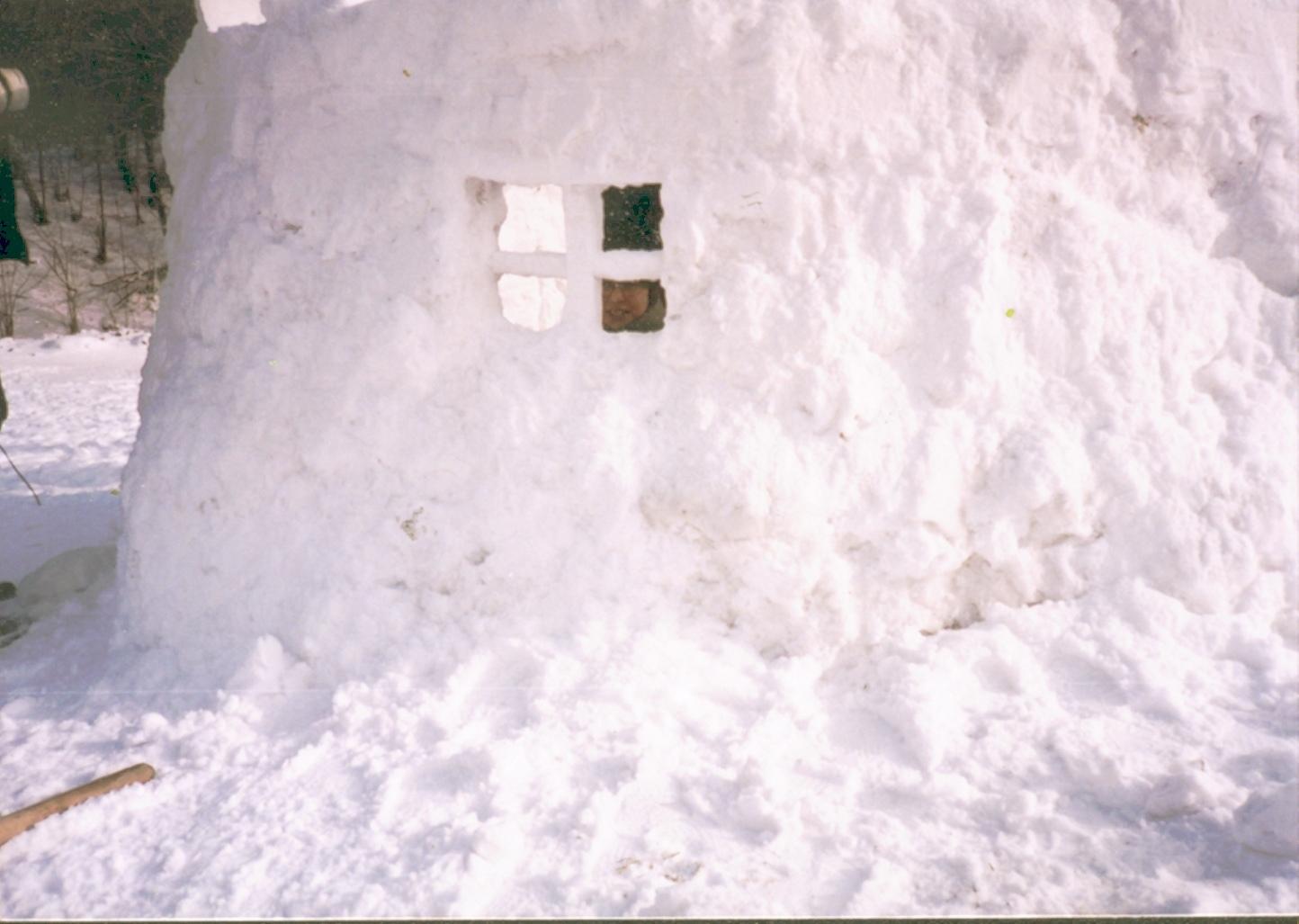 Puławy zimowisko1